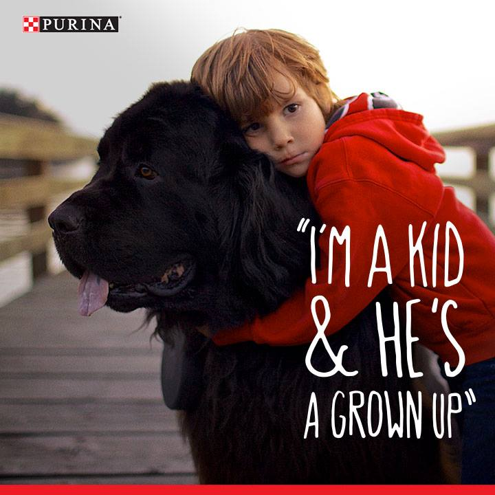 purina-square-ad